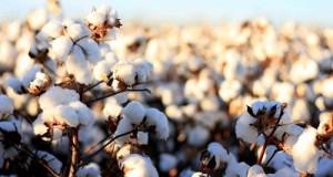 राष्ट्रीय अर्थव्यवस्था में वृद्धि करता रेशम उद्योग