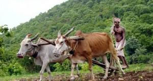 एक गांव में एक किसान क्लब: कृषि क्षेत्र में नई पहल