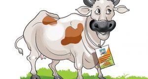विशेष पहचान के साथ अब गायों को भी मिलेगा आधार कार्ड